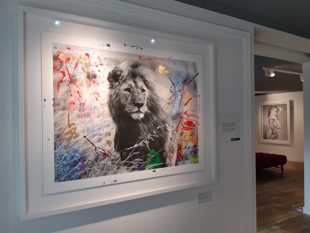 Arno Elias, un vibrant hommage aux espèces en voie d'extinction