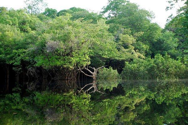 Paysage d'Amazonie à l'Ouest de Manaus (Brésil) Par LecomteB