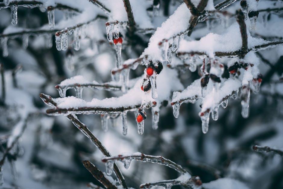 Les neiges de Noël