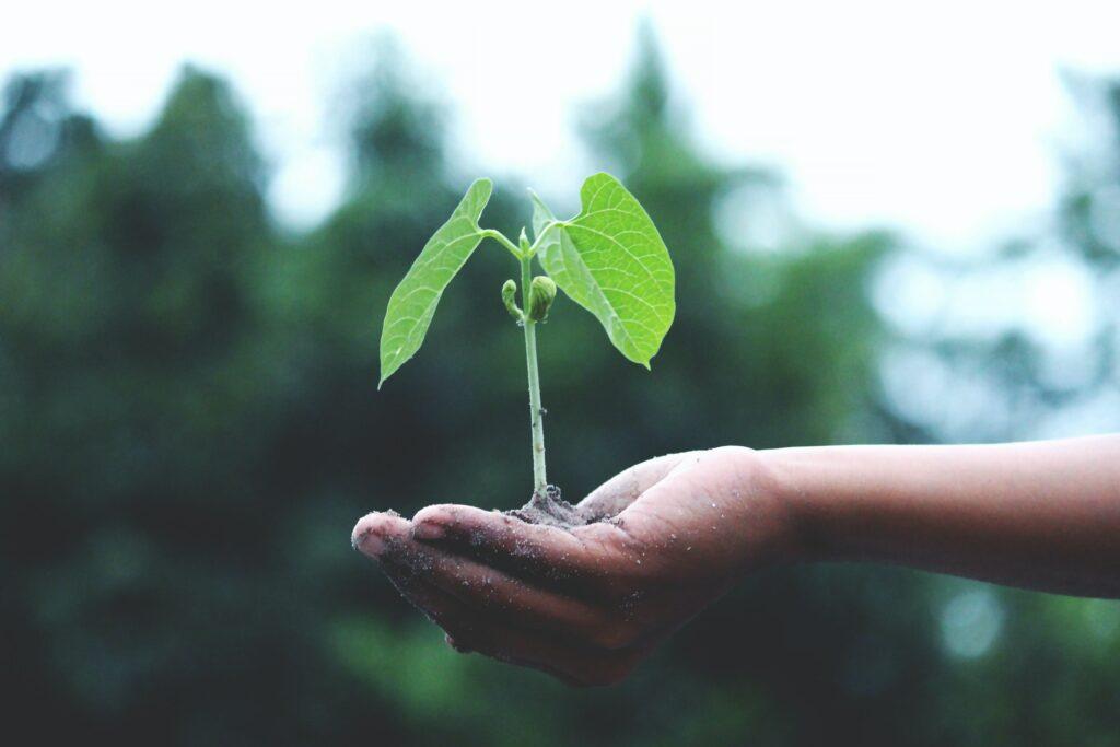 rapport brundtland developpement durable – plante dans main