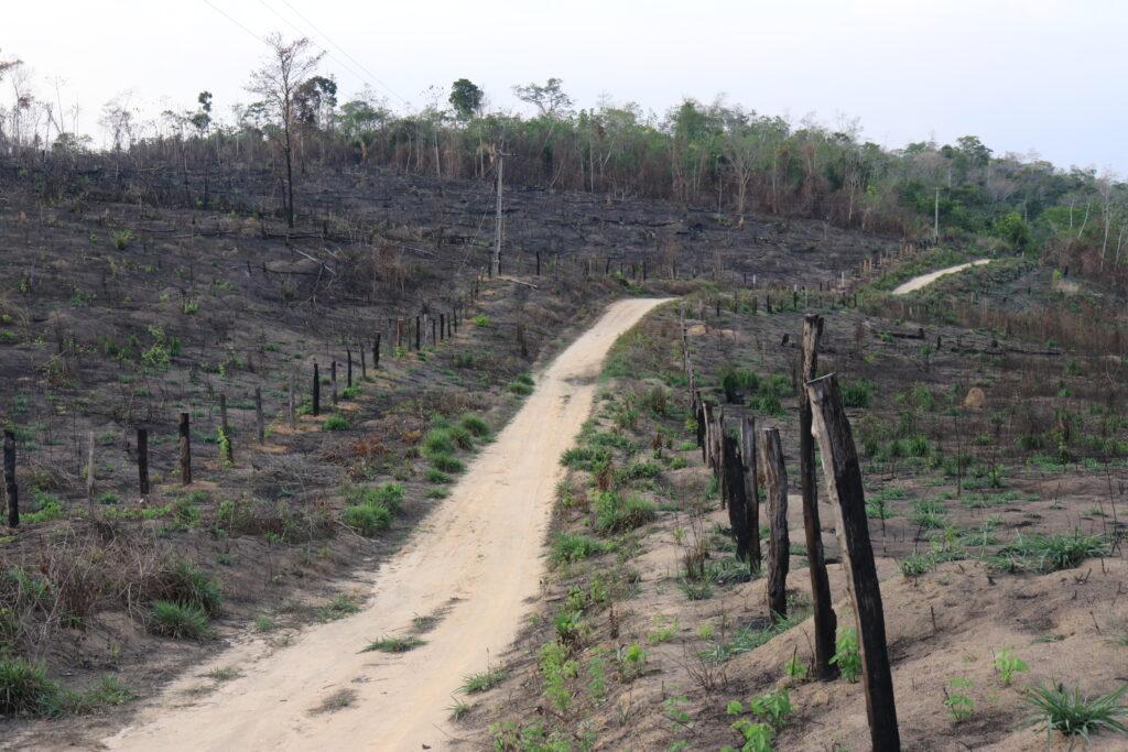 Déforestation dans le territoire autochtone d'Arariboia. © Sarah Shenker/Survival International