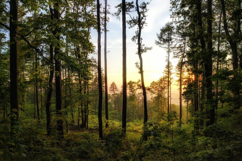 Sorties et activités du mois d'avril – Au cœur de la forêt – Unsplash