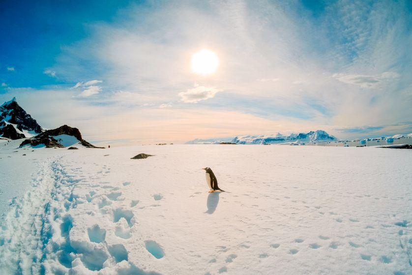 L'Antarctique, ce continent blanc que le monde s'arrache
