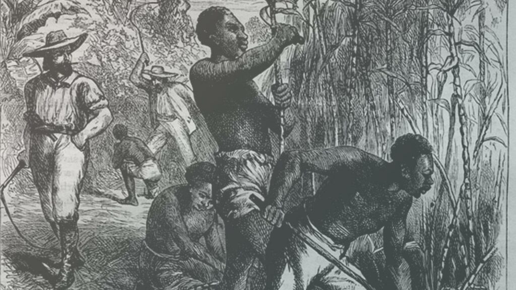 Interprétation artistique du travail des esclaves dans une plantation de cannes à sucre / XIXe siècle